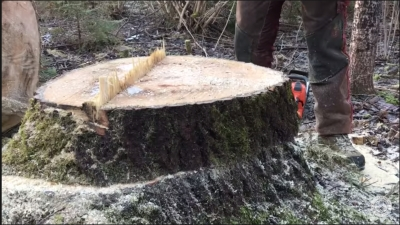 Chainsaw Trick: How to Cut a Stump Without Jamming