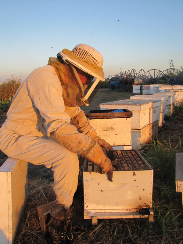 Get the Buzz on Beekeeping: July 13, 2017