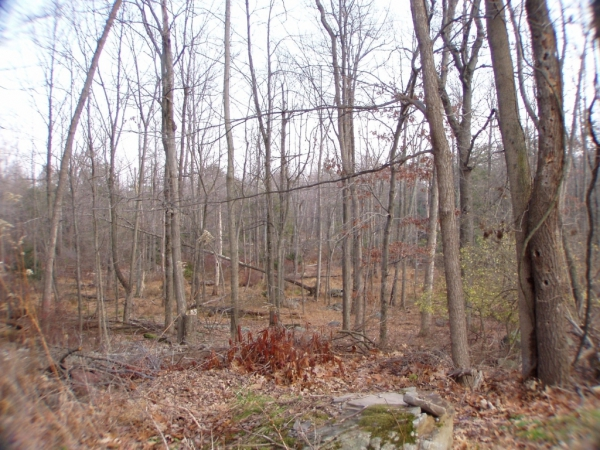 HUGE DEAL IN BARRETT TOWNSHIP! 4 ACRES FOR ONLY $49,900